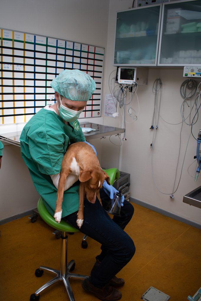 hond operatie