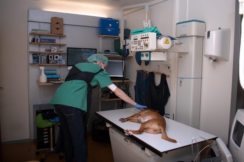 röntgenfoto van hond
