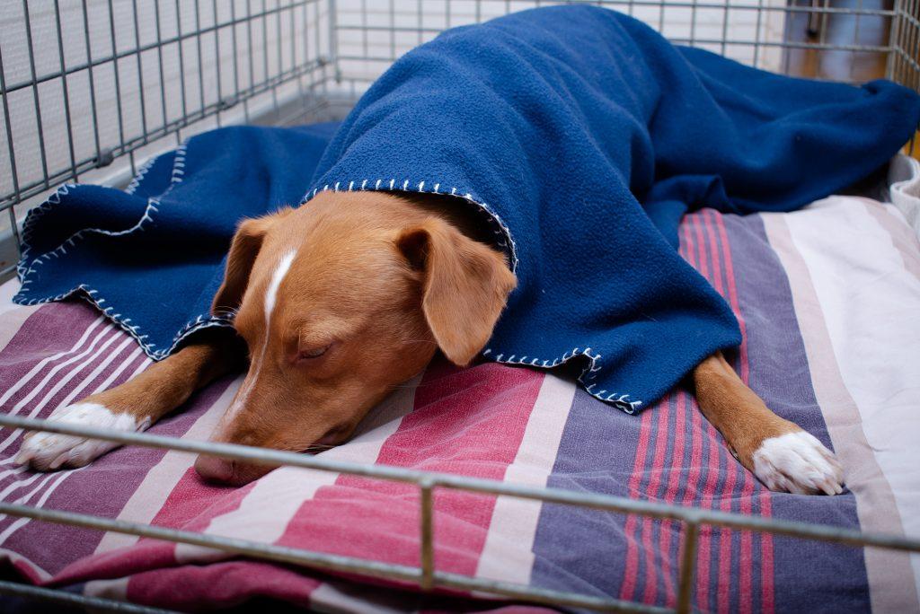 hond narcose uitslapen